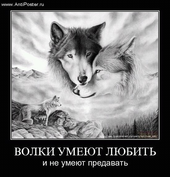 Песня одинокий волк виталий цаплин красивый русский шансон лучшее.