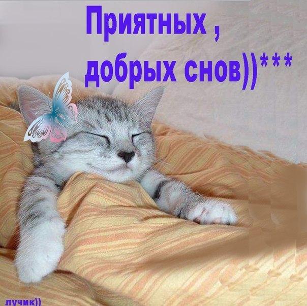 картинки милых снов