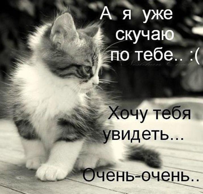 Спи, котенок… пуская тебе присниться прекрасный сон… спокойной ночи, любимый!. Доброй ночи!. Я тебя люблю!. Сладких снов!. Целую глазки, носик….