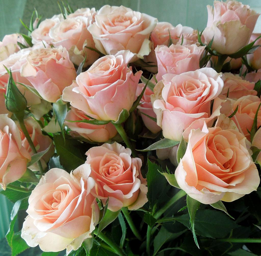 Открытки цветы розы в день рождения