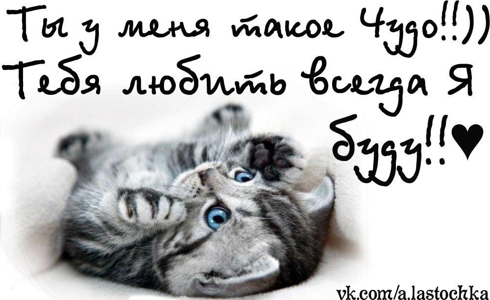 люблю тебя котенок мой картинки
