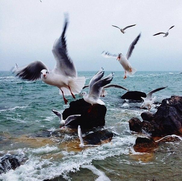 Скачать море а над морем чайки.